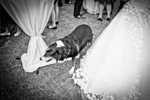 1051-Hochzeitsfotograf-Heilbronn1612_Doro_Jochen